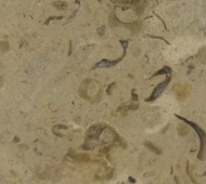 Chemille Limestone - Fossil Collection